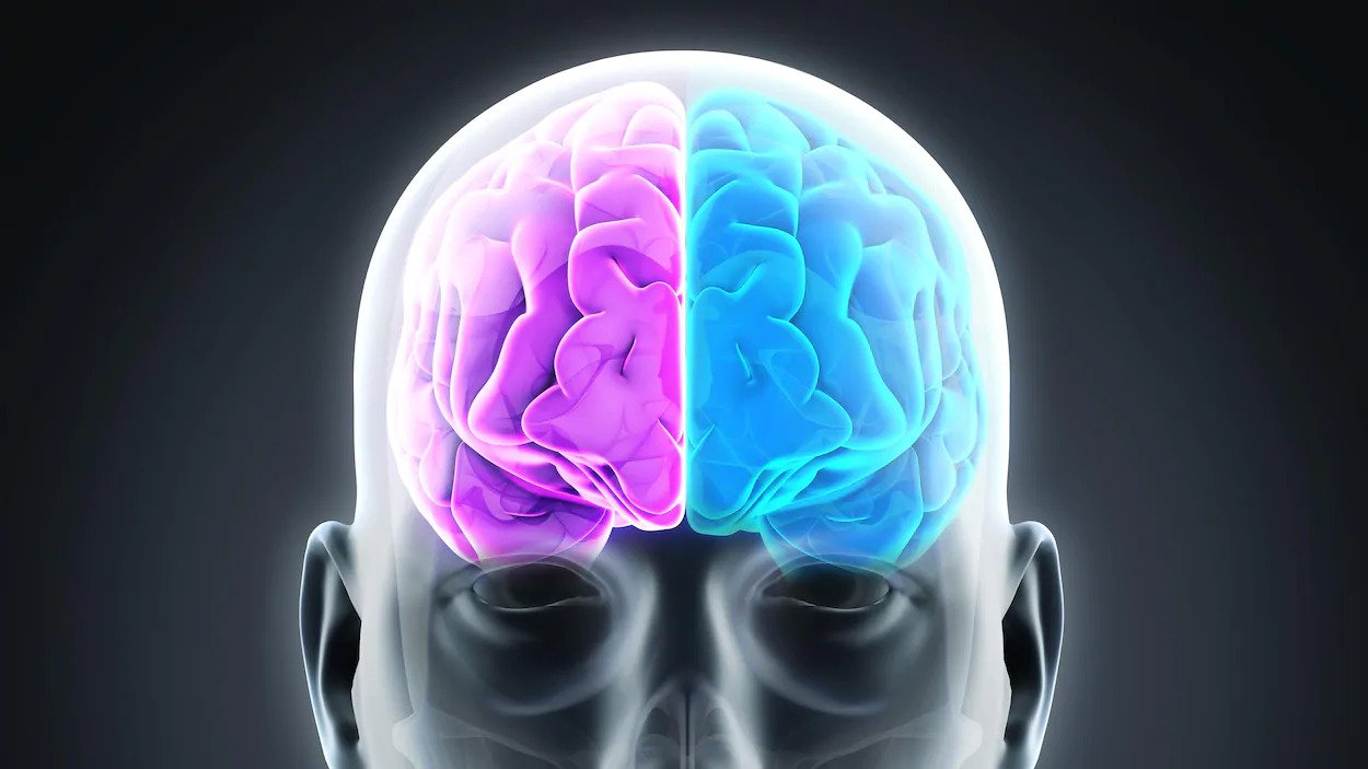 PLAISIR et SOUFFRANCE, entre les deux notre cerveau balance