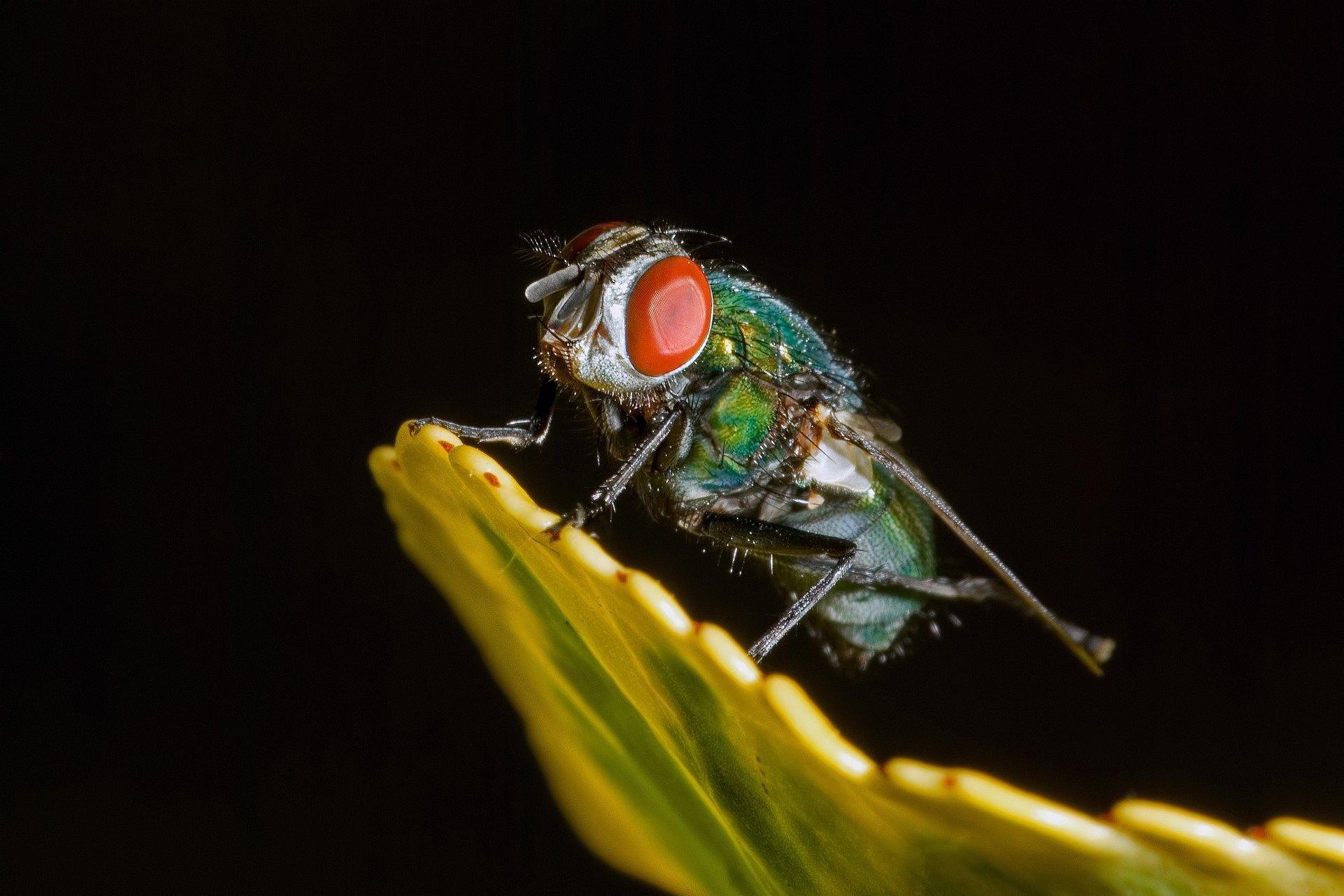 Un fait étrange à Allou Kagne : des mouches jetées par un hélico, Clédor Sène alerte (vidéo)