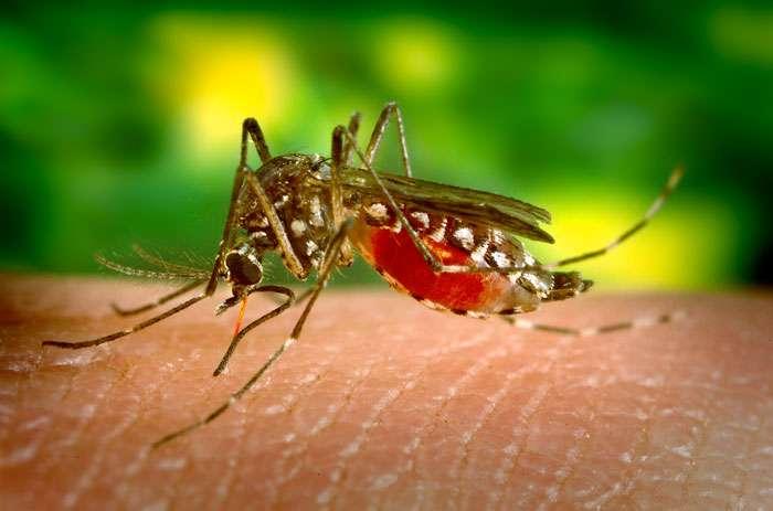 Huit cas de Fièvre jaune dont 02 décès à Tamba et Kédougou : « On est en situation d'épidémie » (médecin-chef)