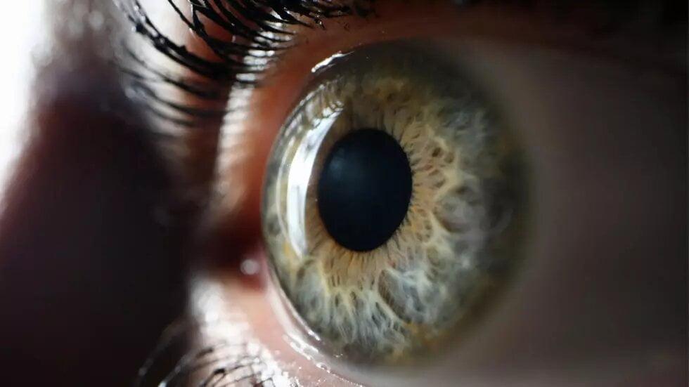 Pour la première fois, un patient aveugle retrouve partiellement la vue
