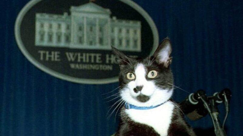 Joe Biden va prendre un chat à la Maison-Blanche